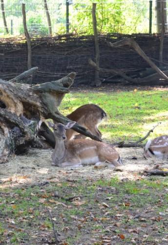 Eilenburger Tierpark