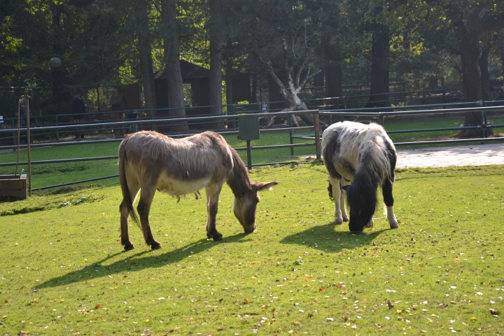 eilenburger-tierpark-esel-ausflug-leipzig